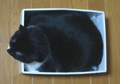 20080702suzu01.JPG