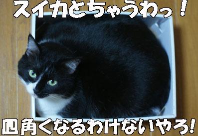 20080702suzu03.JPG