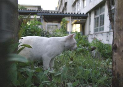 20080720fujimi15.JPG