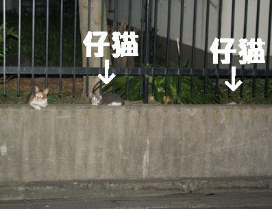 20080720fujimi17.JPG