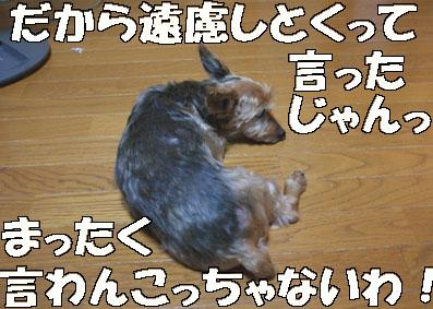 20080730chacha03.JPG