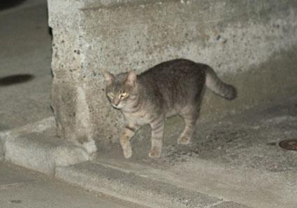 20080819hikaru19.JPG