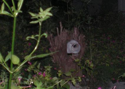 20081005kawasaki02.JPG