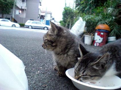 20081012fujimi11.JPG