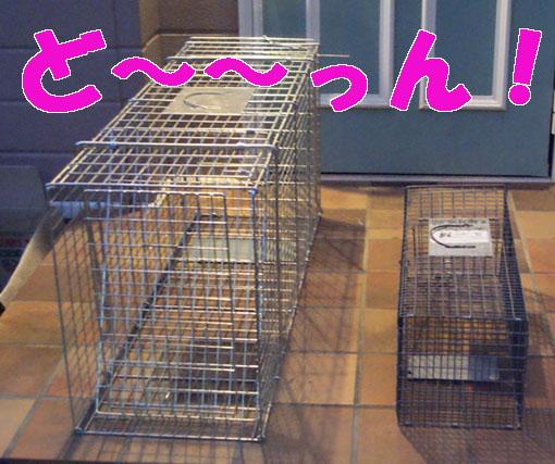20081204hokaku01.JPG