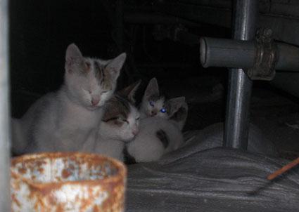 20090609kouji01.JPG