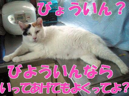 20090808home01c.JPG