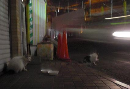 20091110kawa02.JPG