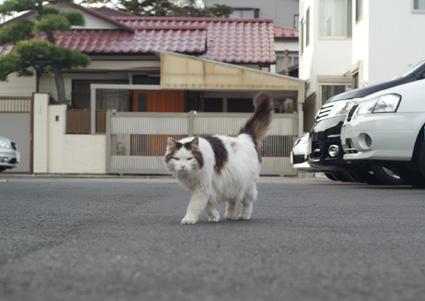 20110103home03_nana.JPG