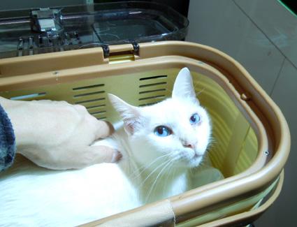 20110209hospital01_yuki.JPG