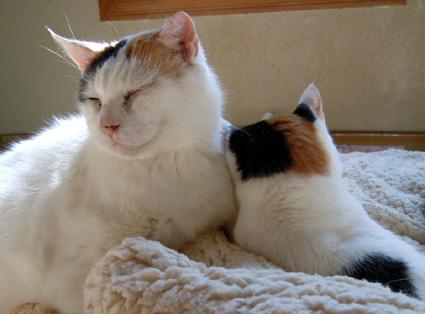 20110214home01_oomike_mika.JPG