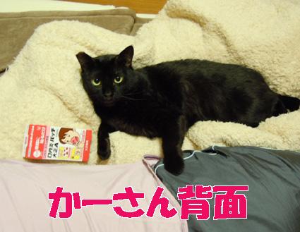 20110508home01_sun.JPG