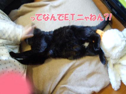 20120407home05_sun.JPG