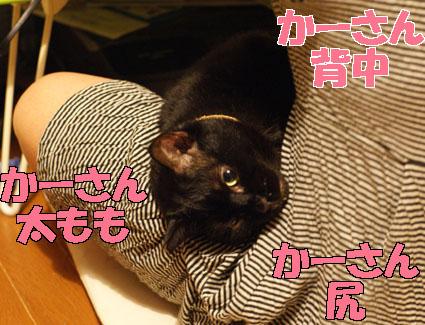 20120529home01_sun.JPG