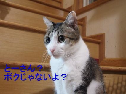 20140107home11.jpg