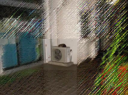 20110708park09-ururu01.jpg