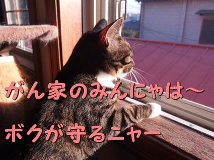 20160116kokoro02.jpg