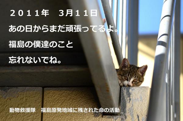 fukushima2018.jpg