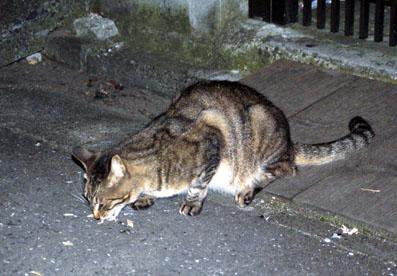 20080717hikaru07.JPG