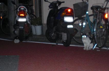 20080819hikaru05.JPG