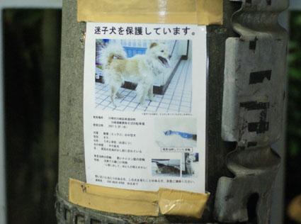 20080819hikaru34.JPG