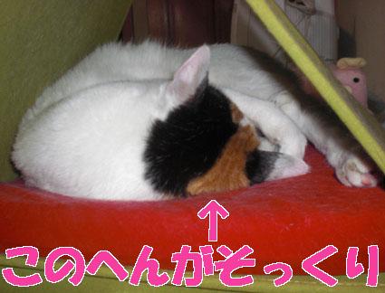 20100130nyanko03.JPG