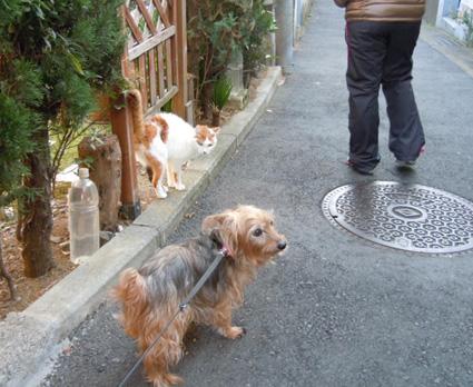 20110109home12_nana.jpg