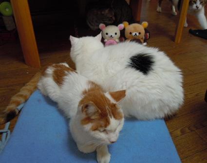 20110117home01_nana.JPG