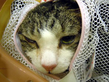 20110305hospital01_natsuo.JPG