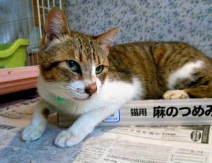 20110605home01_hisai.JPG