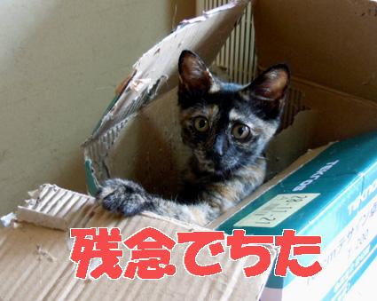 20110725home01.JPG