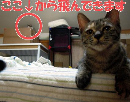 20110828home02.JPG