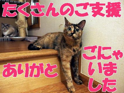 20130409home07_tamae.JPG