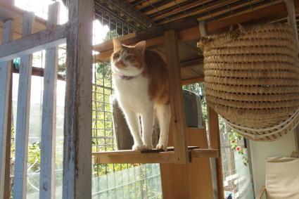 20131109fukushima23.jpg