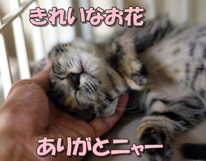 20110622tsutsuji01.jpg