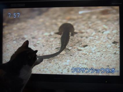 20151115nagi03.jpg