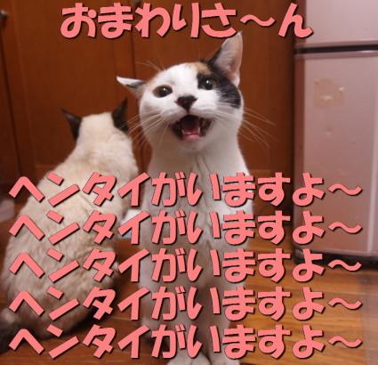 20160316mika04.jpg