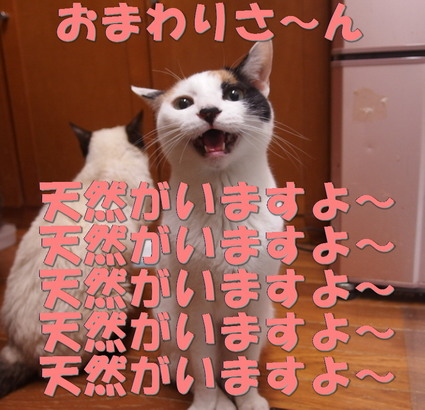 20160316mika05.jpg