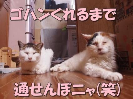 20180827tomo_oomike02.jpg
